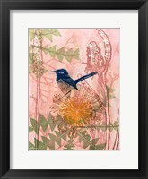 Framed Little Blue Wren