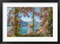 Framed Wisteria and Mountains - Lago di Como