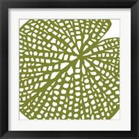 Framed Lilypad