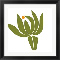 Framed Protea