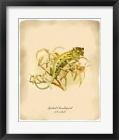 Framed Chameleopard