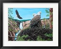 Framed Gathering of Eagles at Yellowstone Falls