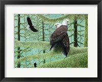 Framed Gathering of Eagles