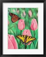 Framed Butterflies and Tulips