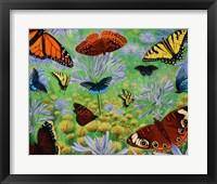 Framed Butterfly Bonanza