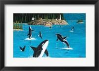 Framed Eagles & Orcas