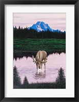 Framed Moose near Mt. Moran
