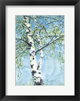 Framed Aspen Tree 1