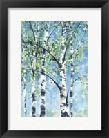 Framed Aspen Tree 2