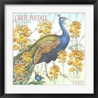Framed Peacock Postcard