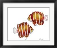 Framed Ocean- Peppermint Angelfish