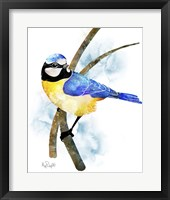 Framed Songbirds- Blue Titmouse