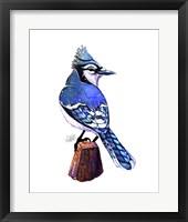 Framed Songbirds- Bluejay