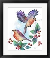 Framed Songbirds- Euro Robins