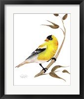 Framed Songbirds- Goldfinch