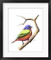 Framed Songbirds- Painted Bunting