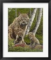 Framed Bobcat with Kits