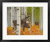 Framed Buck and Doe Early Rut