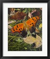 Framed Orange Moth Question Mark Butterfly