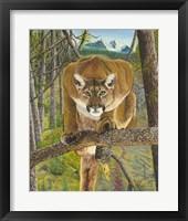 Framed Mountain Lion