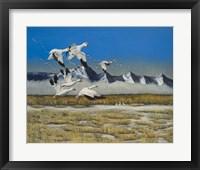 Framed Sow Geese Spring Flight