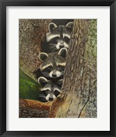 Framed Three Racoons
