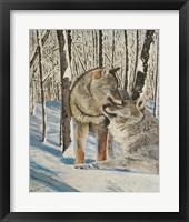 Framed Wolves Devotion