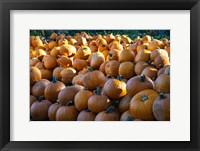 Framed Pumpkins 1