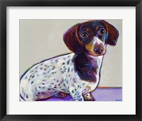 Framed Dachshund With Spots
