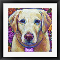 Framed Molly the Blond Lab