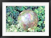 Framed Garden IX