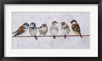Framed House Sparrow