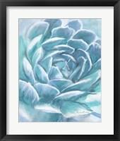 Framed Aqua Succulent
