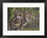 Framed Albus and Boo the Bengal Cats