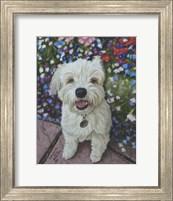 Framed Little Ozz the Pomeranian Poodle Cross