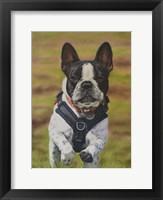 Framed George Dog the French Bulldog