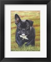 Framed Peppa the French Bulldog