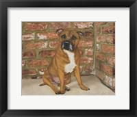 Framed Troy the Staffordshire Bull Terrier