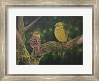 Framed Yellow Hammer Birds