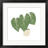 Framed Philodendron Gloriosum IV