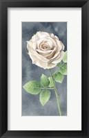 Framed Ivory Roses on Gray Panel II