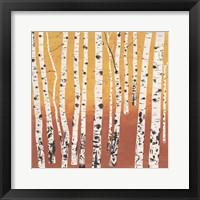 Framed Birch Wilderness