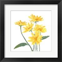 Framed Wildflower Group I