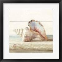 Driftwood Shell IV Framed Print