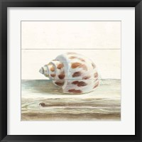 Driftwood Shell II Framed Print