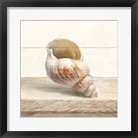 Driftwood Shell I Framed Print