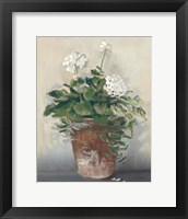Framed Pot of White Geraniums
