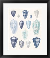 Blue Shell Assortment I Framed Print