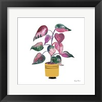 Potted Jewels II Framed Print