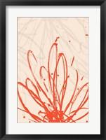 Framed Mandarin Burst II